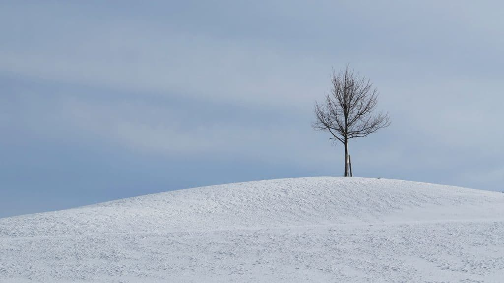 Fine art photography of a tree