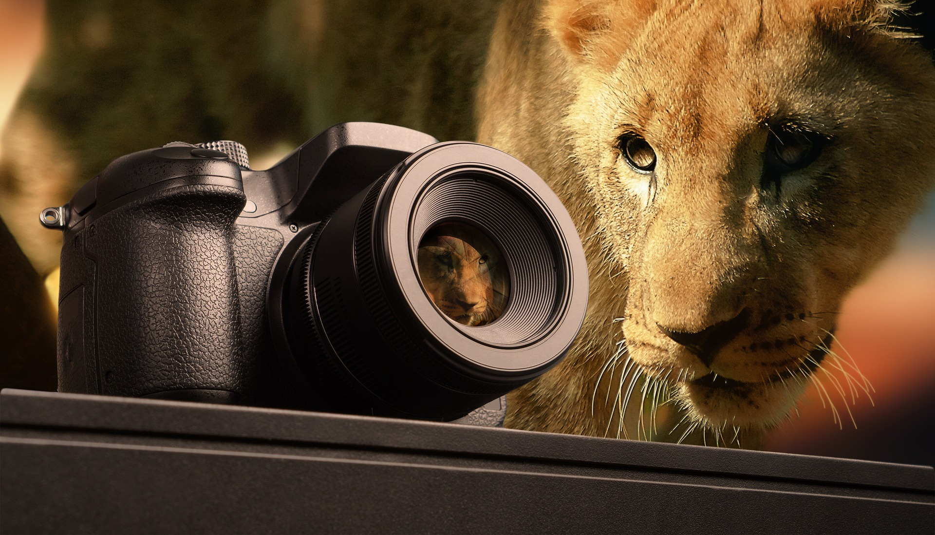 Loin with a camera - Best cameras for Wildlife Photography