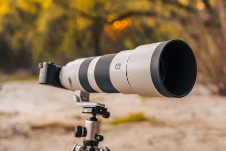 Best Wildlife Photography Lenses 2021
