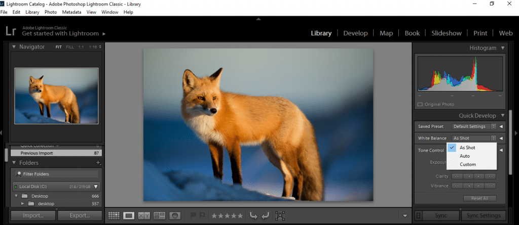 Photo of a fox being Edited