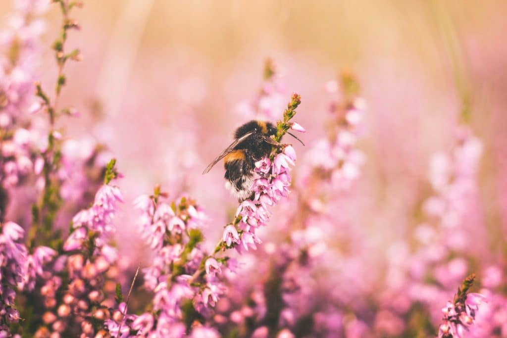 Tips for Photographing Insects - Honey bee