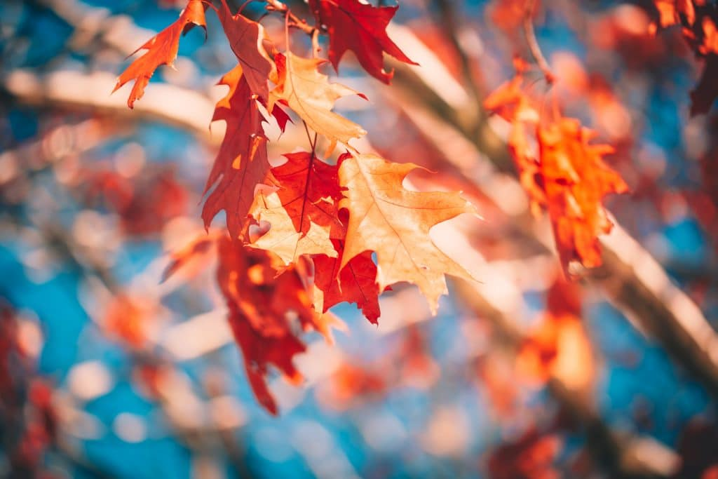 Autumn leaves - Color Temperature in Photography