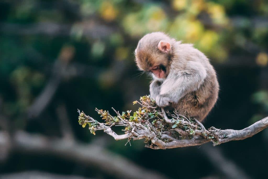 Monkey on a tree photo with telephoto lens