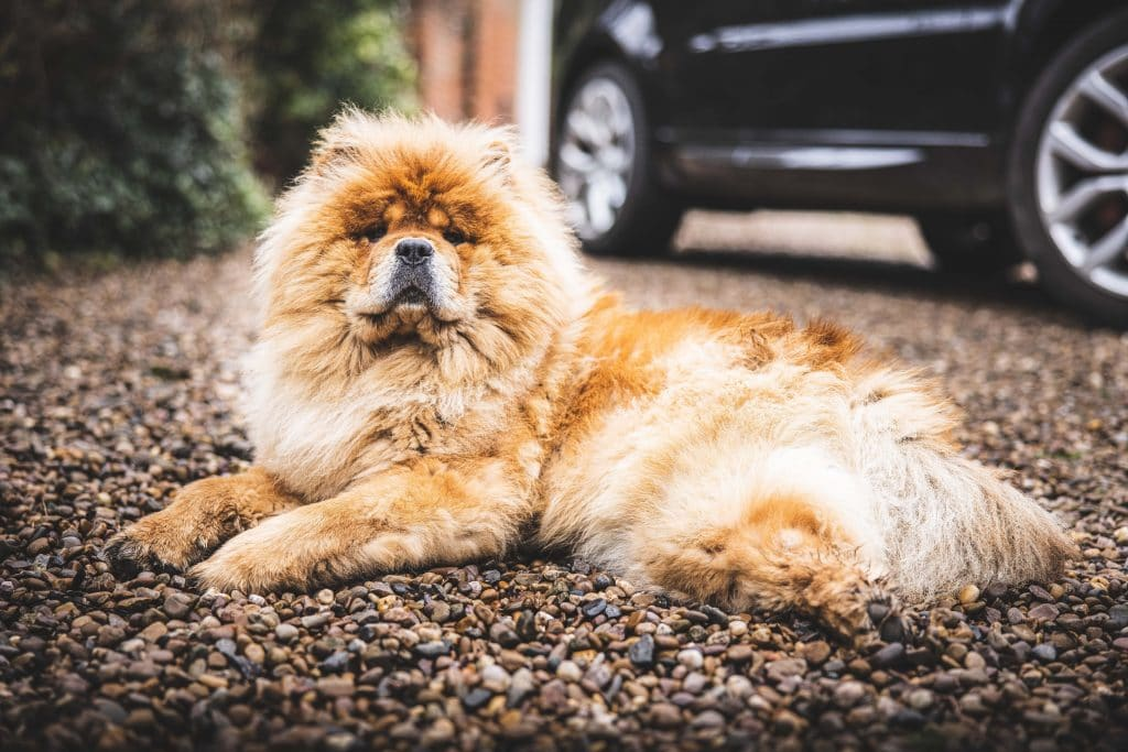 Pet photography of a dog