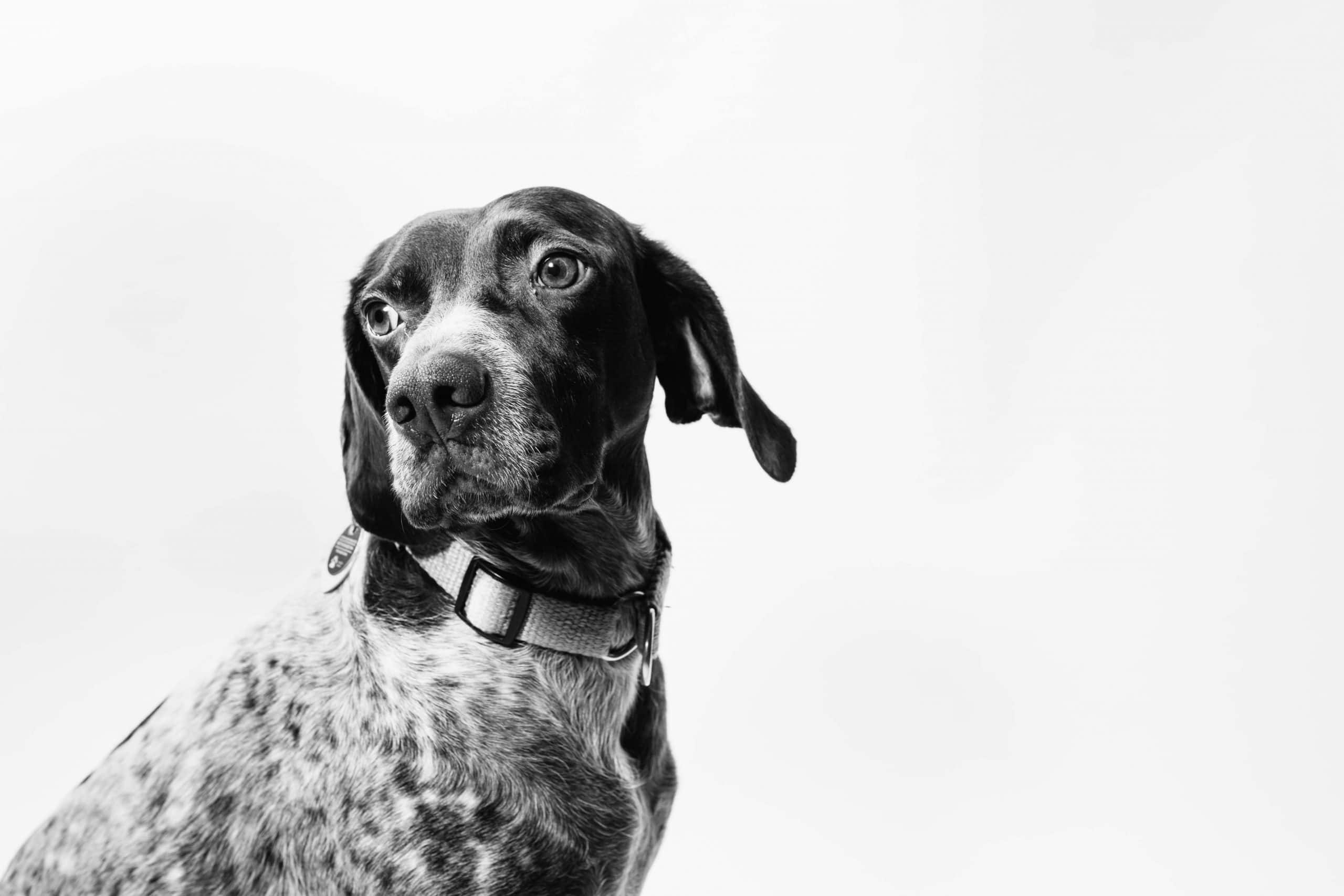 black and white pet photography